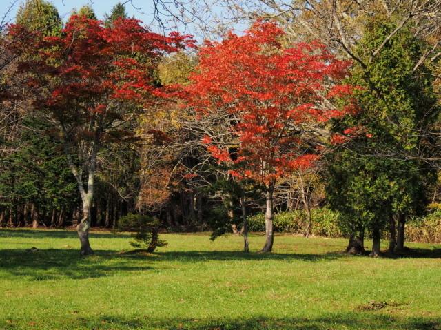 秋色の森林公園と遊水地_c0360399_18583642.jpg