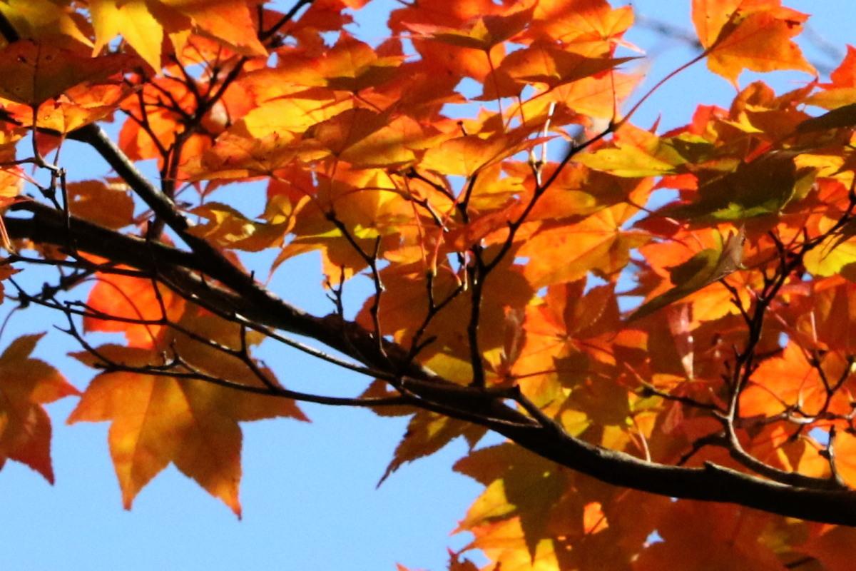 秋色の森林公園と遊水地_c0360399_19005739.jpg