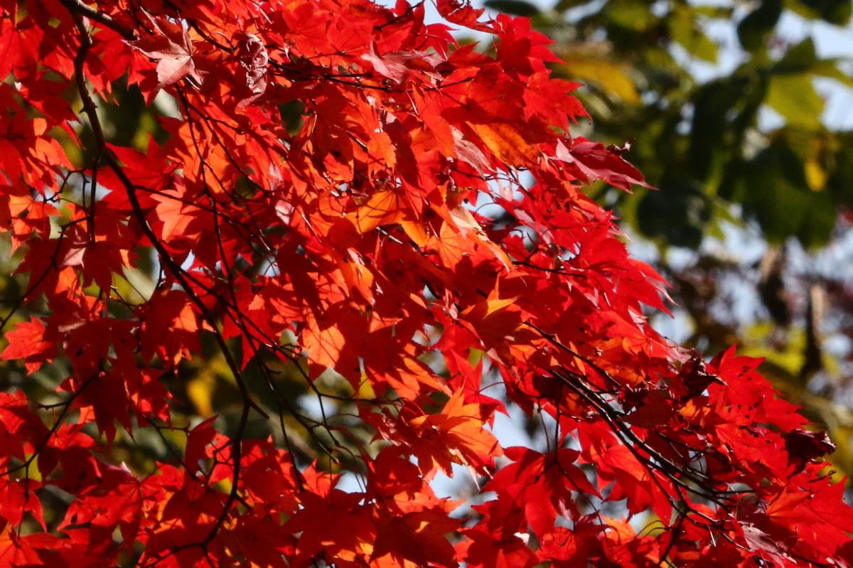 秋色の森林公園と遊水地_c0360399_19011393.jpg