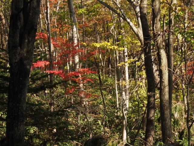 秋色の森林公園と遊水地_c0360399_19040005.jpg