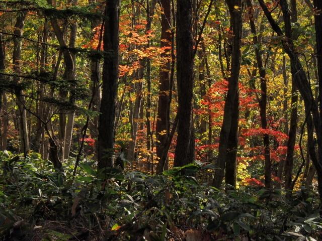 秋色の森林公園と遊水地_c0360399_19042322.jpg