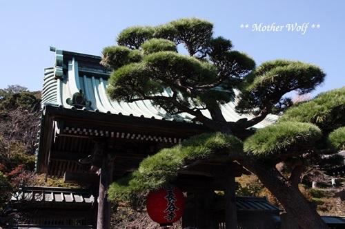 マザーウルフ遠足、鎌倉へ行って来ました~!!_e0191026_20181819.jpg