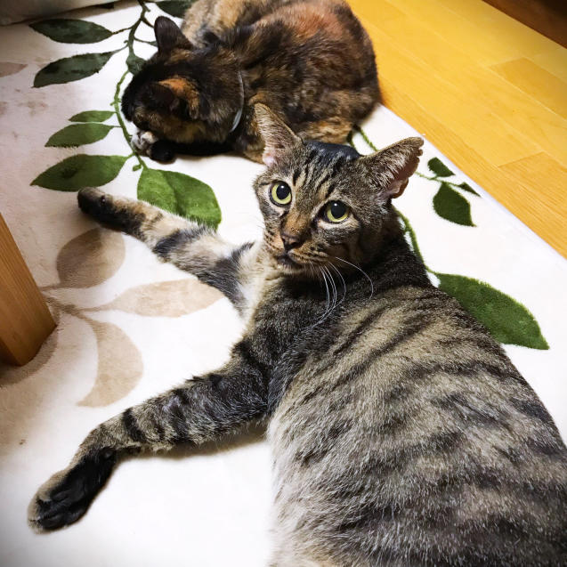 女子猫たちが優しい_d0355333_21394396.jpg