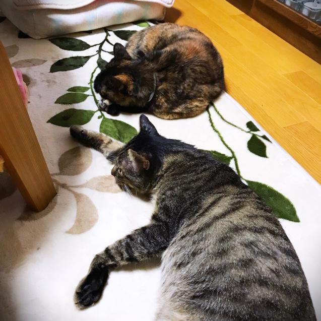 女子猫たちが優しい_d0355333_21394582.jpg
