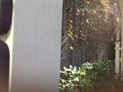 庭手入れ_c0186441_17174514.jpg