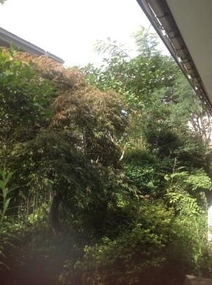 庭手入れ_c0186441_17334181.jpg