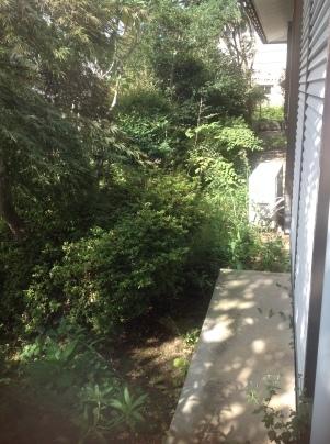 庭手入れ_c0186441_17353994.jpg