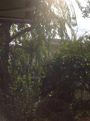 庭手入れ_c0186441_17362154.jpg