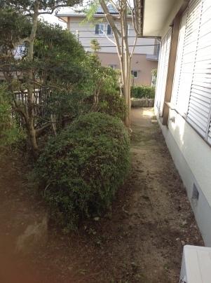 庭手入れ_c0186441_17404021.jpg