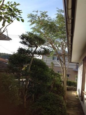 庭手入れ_c0186441_17410801.jpg