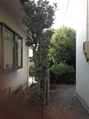 庭手入れ_c0186441_17451204.jpg
