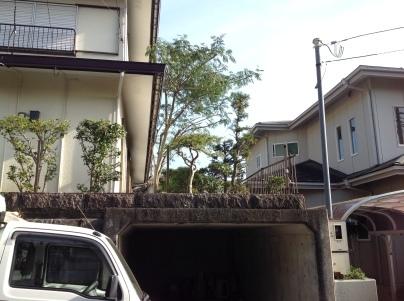 庭手入れ_c0186441_17485578.jpg