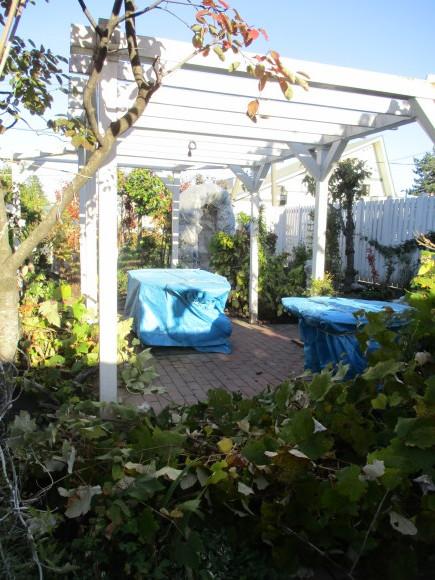 終わったお庭の冬囲いとアナベルでのリース作り_a0279743_10331495.jpg