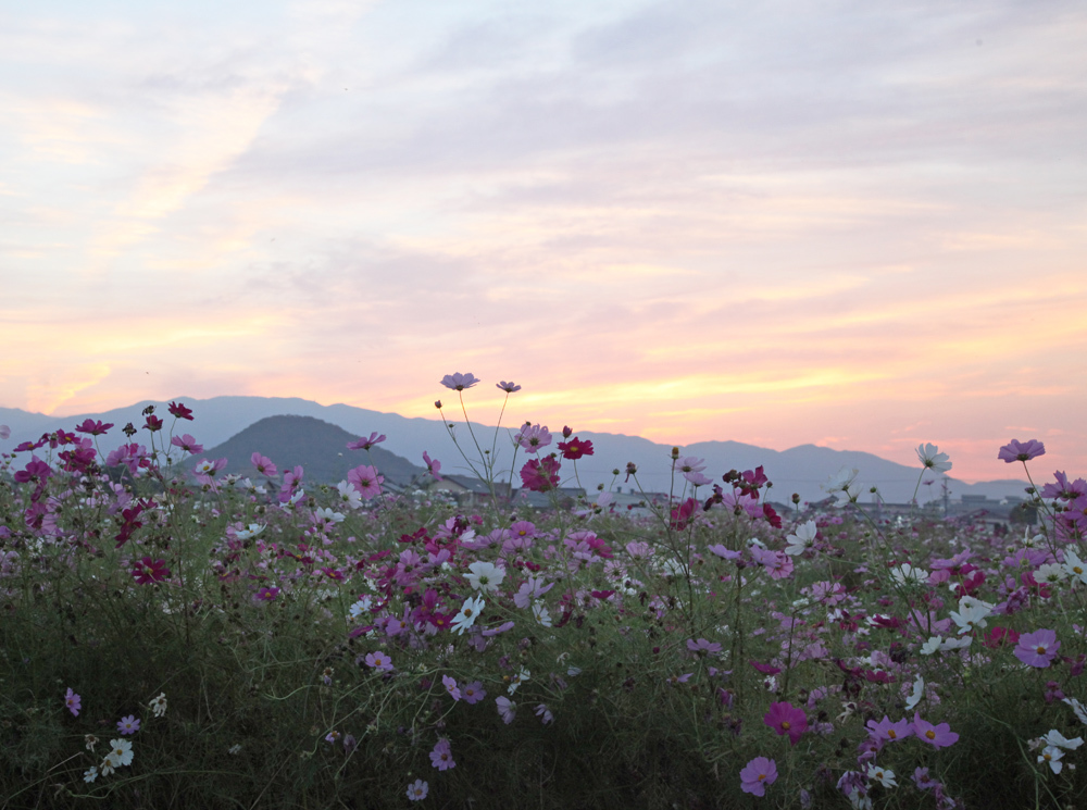 御所市 藤原宮跡 夕焼け_c0108146_23412117.jpg