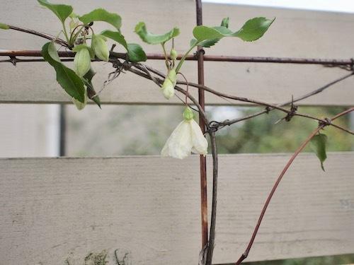 秋の庭 & 葡萄の苗_a0335560_17175941.jpg