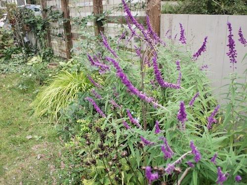 秋の庭 & 葡萄の苗_a0335560_17175971.jpg