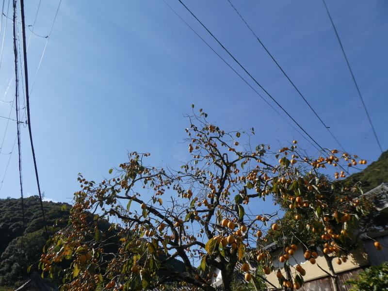 「岬陵クラブ」孝子の森散策_c0108460_18273700.jpg