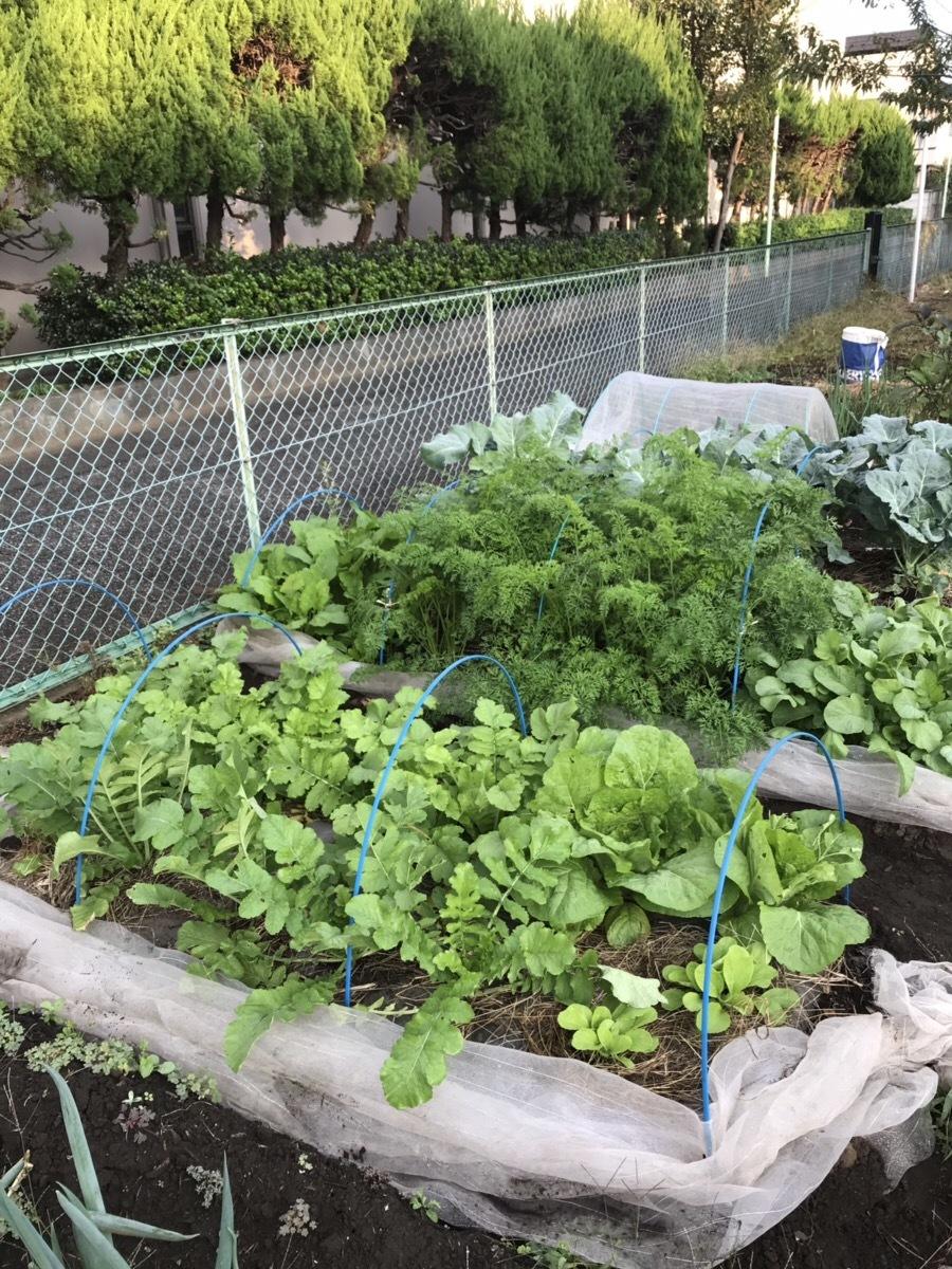 ☆野菜11種、秋物語☆_f0170586_10293863.jpg