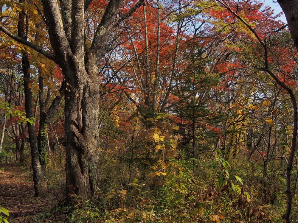 林東公園の紅葉 ほか_c0360399_22273703.jpg