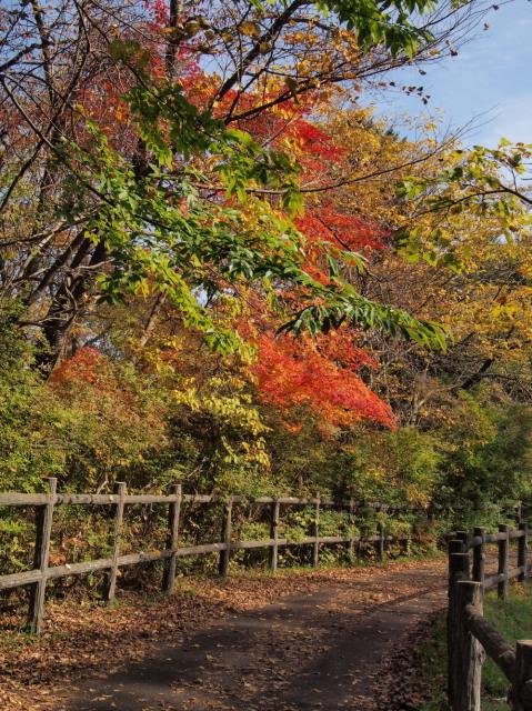 林東公園の紅葉 ほか_c0360399_22291813.jpg