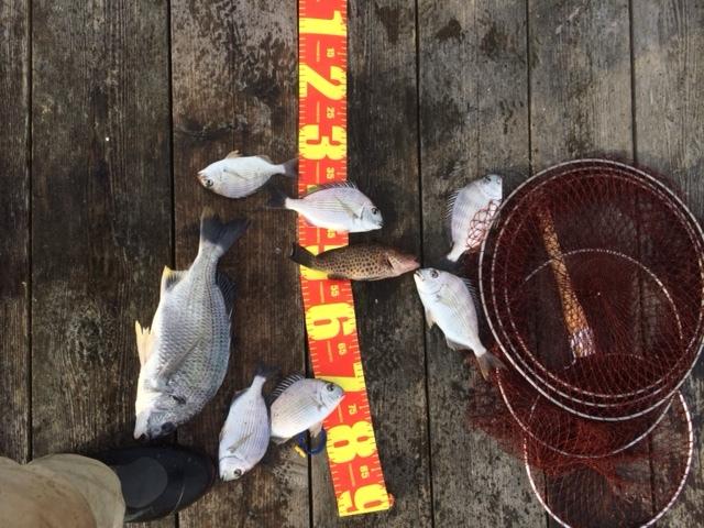 10月は釣りで忙しい_e0150006_13091398.jpg