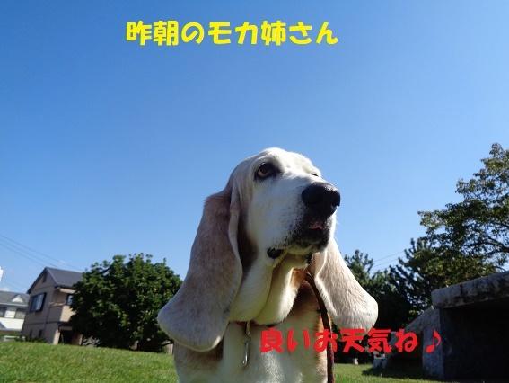f0121712_08130599.jpg
