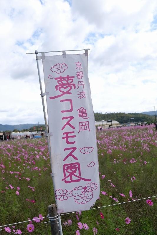 秋桜_e0374932_06262259.jpg