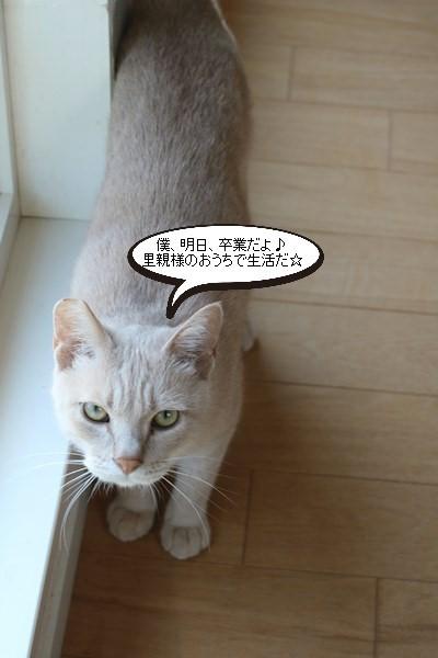 保護猫さん、明日、卒業!_e0151545_21052940.jpg