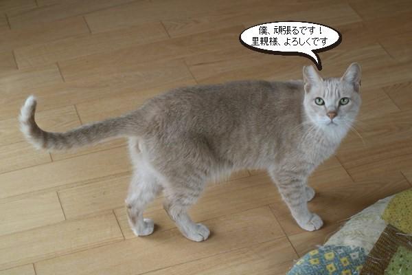 保護猫さん、明日、卒業!_e0151545_21055129.jpg