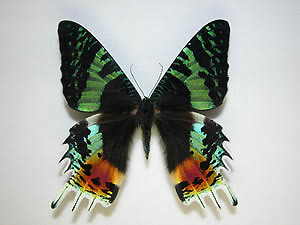 蝶と蛾?_b0057679_09195197.jpg