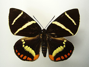 蝶と蛾?_b0057679_09200852.jpg