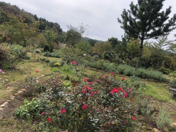 秋の米山ガーデン_d0182179_21301678.jpg