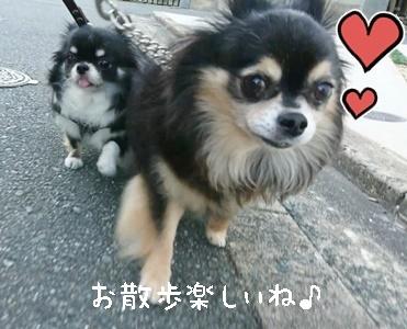 仲良くお散歩_f0357682_20444200.jpeg