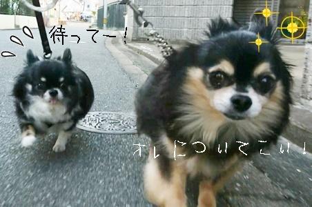 仲良くお散歩_f0357682_20445175.jpeg