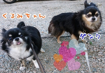 仲良くお散歩_f0357682_20453031.jpeg