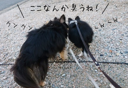 仲良くお散歩_f0357682_20473996.jpeg