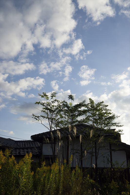 秋色_b0074098_20521360.jpg