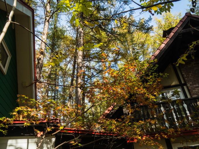 秋深まり・・忙しそうなエゾリス君!カラマツの紅葉も進みます。_f0276498_23350881.jpg