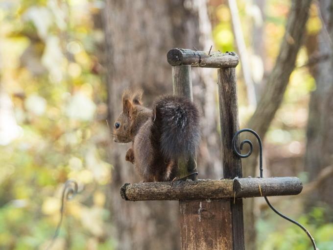 秋深まり・・忙しそうなエゾリス君!カラマツの紅葉も進みます。_f0276498_23371426.jpg