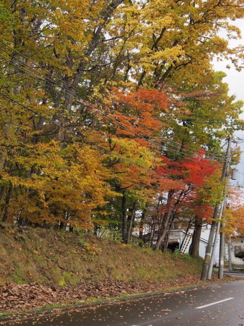 近所の公園の紅葉/遊水地で(10/23)① _c0360399_23153749.jpg