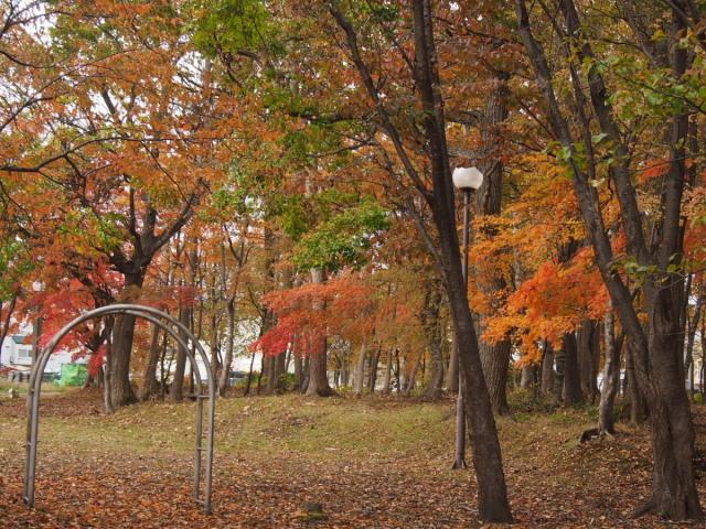 近所の公園の紅葉/遊水地で(10/23)① _c0360399_23161751.jpg