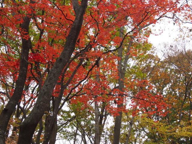 近所の公園の紅葉/遊水地で(10/23)① _c0360399_23200262.jpg