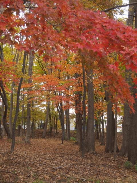 近所の公園の紅葉/遊水地で(10/23)① _c0360399_23204210.jpg