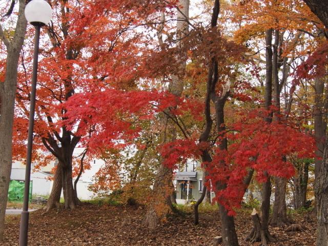 近所の公園の紅葉/遊水地で(10/23)① _c0360399_23210569.jpg