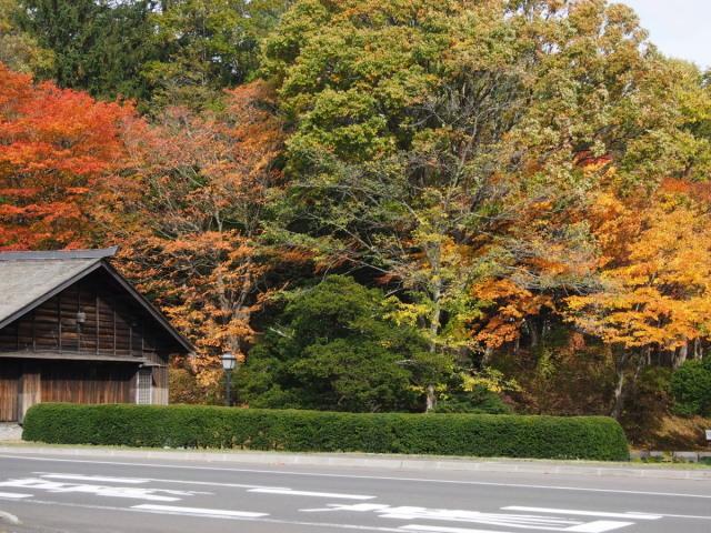 近所の公園の紅葉/遊水地で(10/23)① _c0360399_23462873.jpg