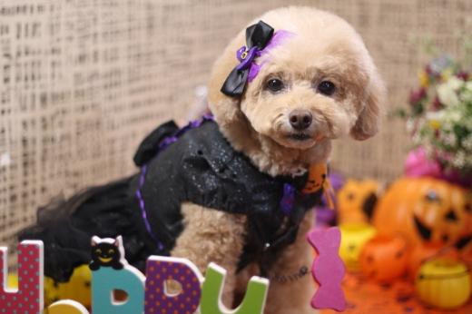 10月21日ご来店のワンちゃんです!!_b0130018_00224907.jpg