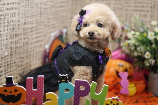 10月21日ご来店のワンちゃんです!!_b0130018_00230903.jpg