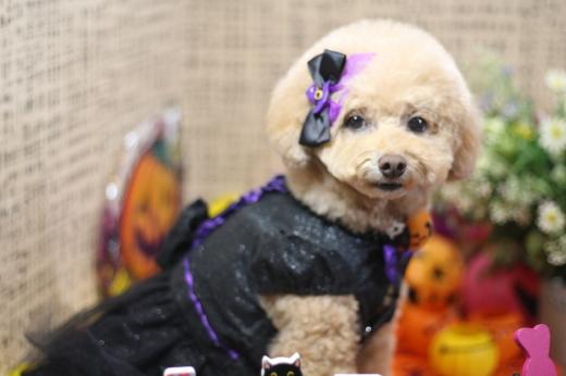 10月21日ご来店のワンちゃんです!!_b0130018_00235802.jpg