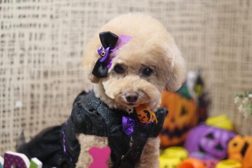 10月21日ご来店のワンちゃんです!!_b0130018_00241161.jpg