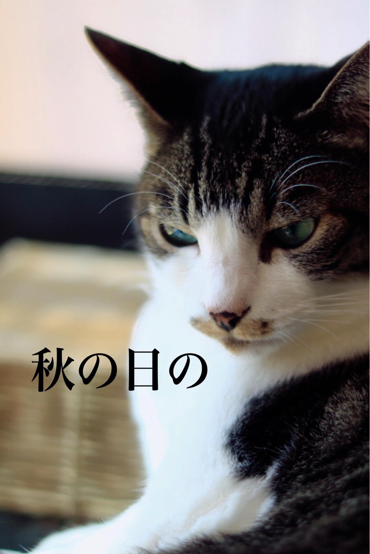 にゃんこ劇場「秋の俳句!」_c0366722_20555832.jpeg